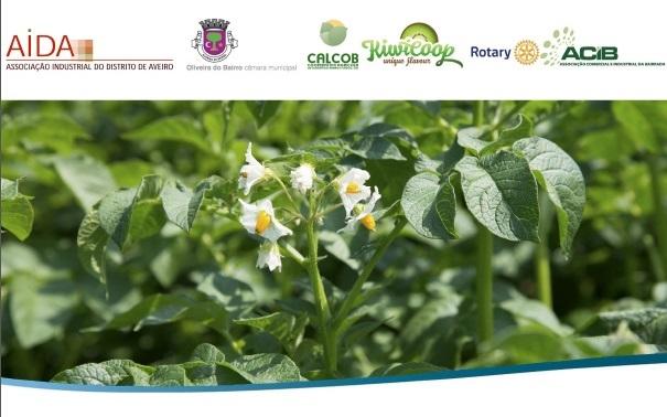 Sessão de Esclarecimentos Pequenos Investimentos Agricultura PDR2020